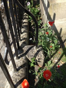 Queen Square Poppies